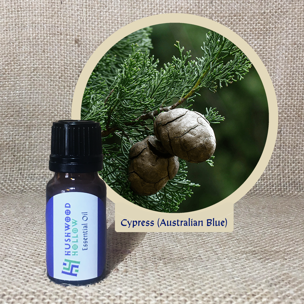 Cypress (Australian Blue) - Pure Therapeutic Grade Essential Oil - Hushwood Hollow