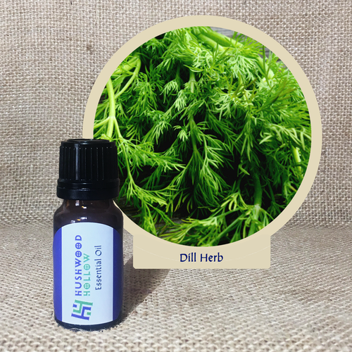 Dill Herb - Pure Therapeutic Grade Essential Oil