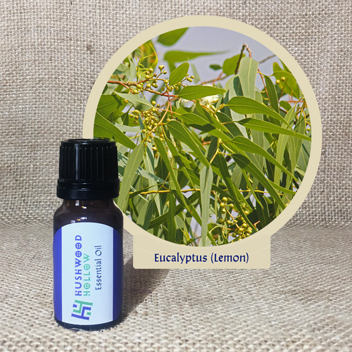 Eucalyptus (lemon) - Pure Therapeutic Grade Essential Oil - Hushwood Hollow