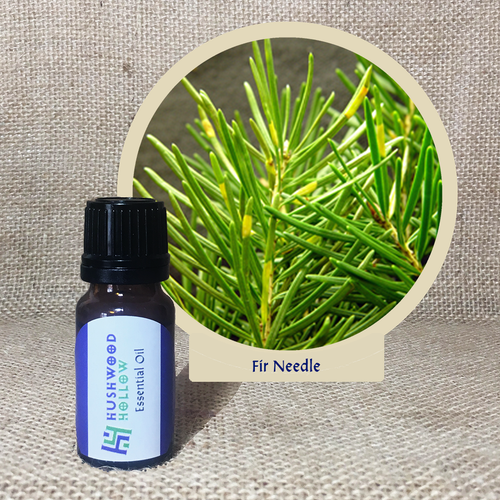 Fir Needle - Pure Therapeutic Grade Essential Oil - Hushwood Hollow