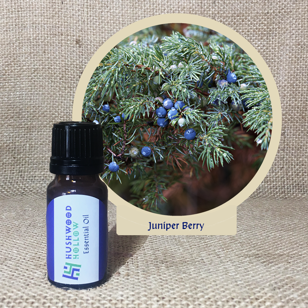 Juniper Berry - Pure Therapeutic Grade Essential Oil - Hushwood Hollow