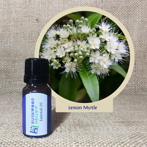 Lemon Myrtle - Pure Therapeutic Grade Essential Oil - Hushwood Hollow