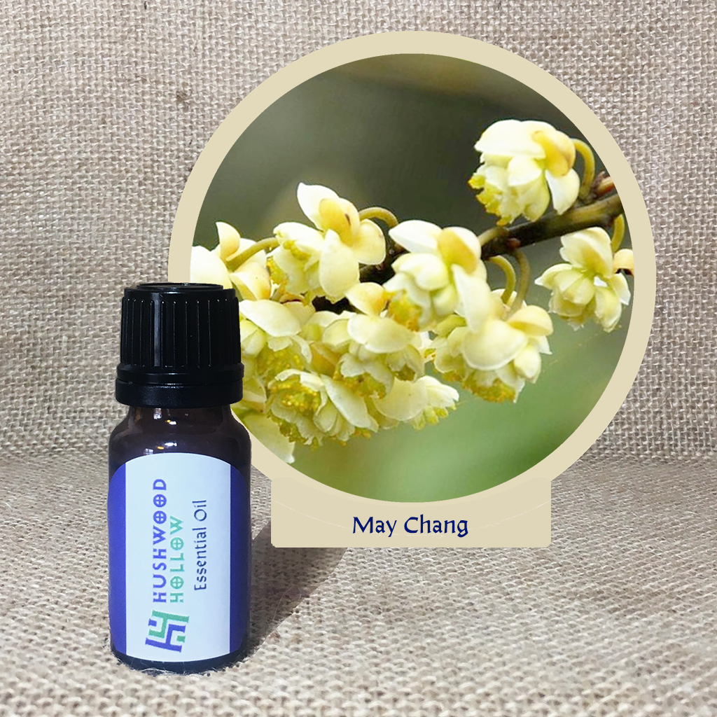 May Chang - Pure Therapeutic Grade Essential Oil - Hushwood Hollow