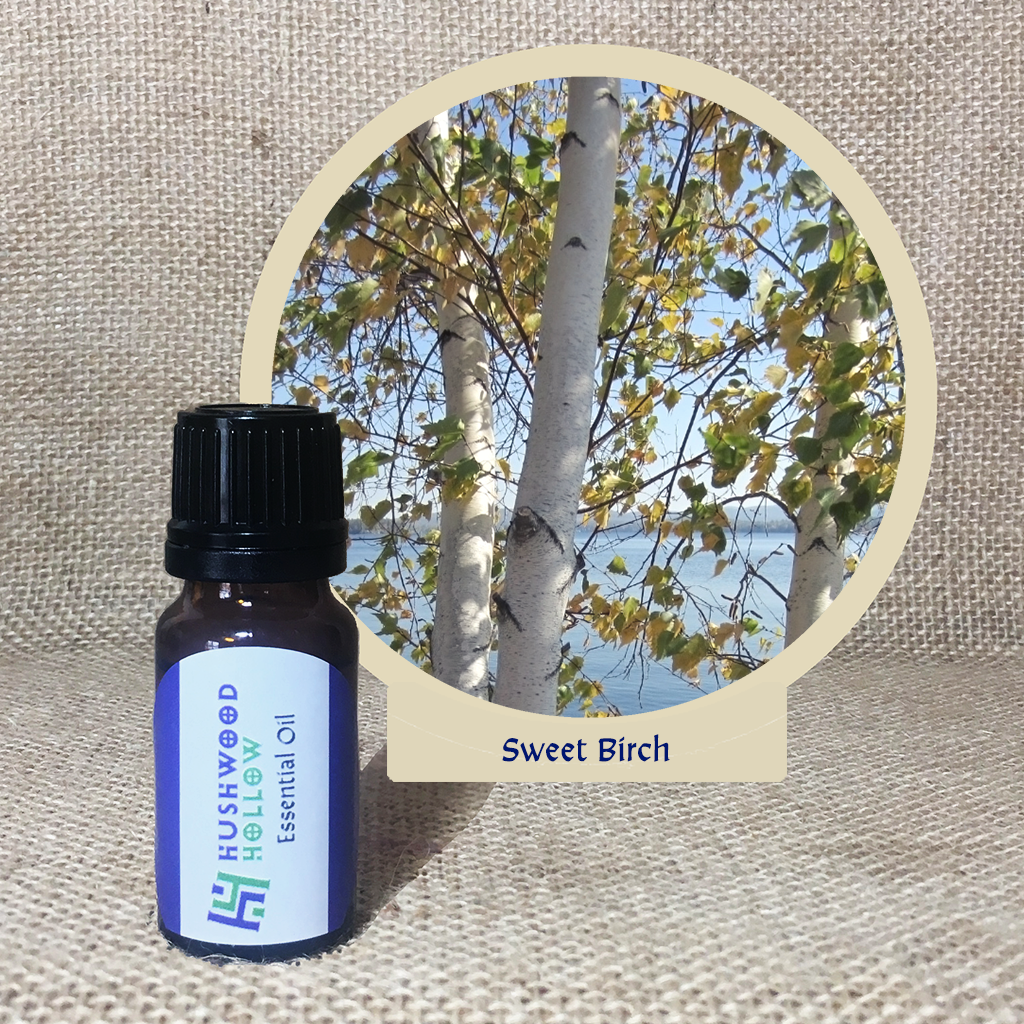 Sweet Birch - 20% perfumery tincture
