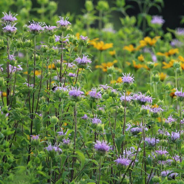 SUNNY | New York's Wildflowers Beckon
