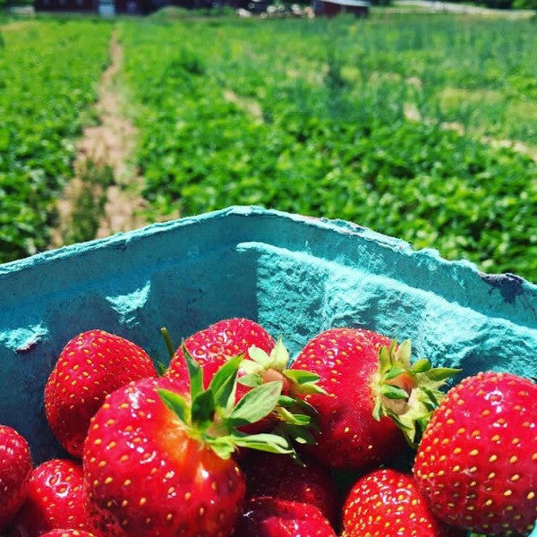 The Must Visit U-Pick Farms of New York State