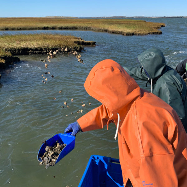 NURTURING | Saving Long Island's Moriches Bay One Oyster at a Time