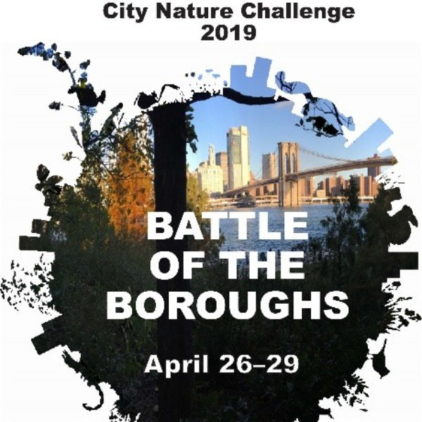 GROWING | City Nature Challenge 2019: Calling New York City's Citizen Scientists