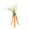 Airplant Holder in Natural Leather
