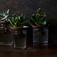 Plant Plate - The Farmhouse Project - New York Makers