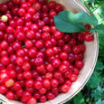 Sour Cherry Preserve - les collines - New York Makers