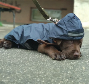 """Downpour Doggo"" Waterproof Rain Jacket"
