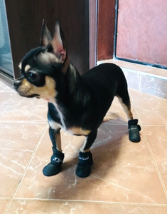 Rubber Pup Rainboots