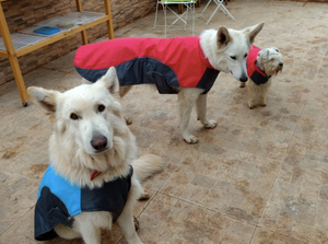 """Super Swell Shell"" Dog Jacket"