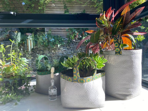 grow bags at a window sill