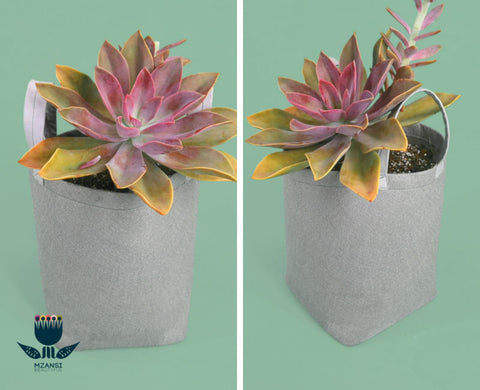 grow bags with succulent