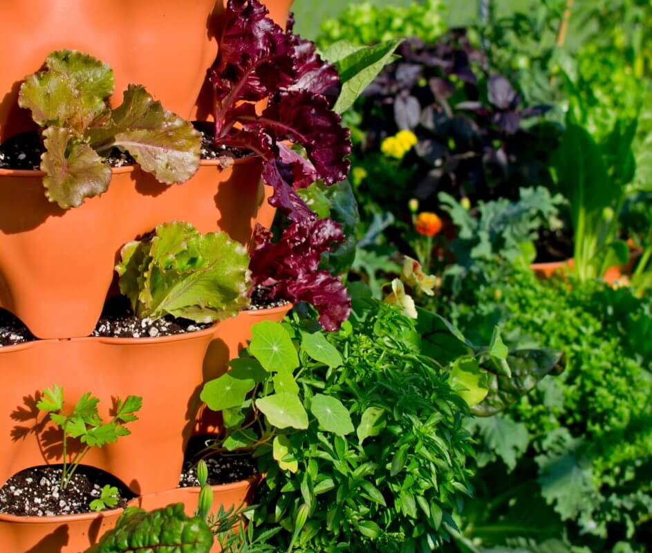 Garden Tower Blog: Interactive Drag & Drop Planting Designer and Salad Tower Sample Planting Plan