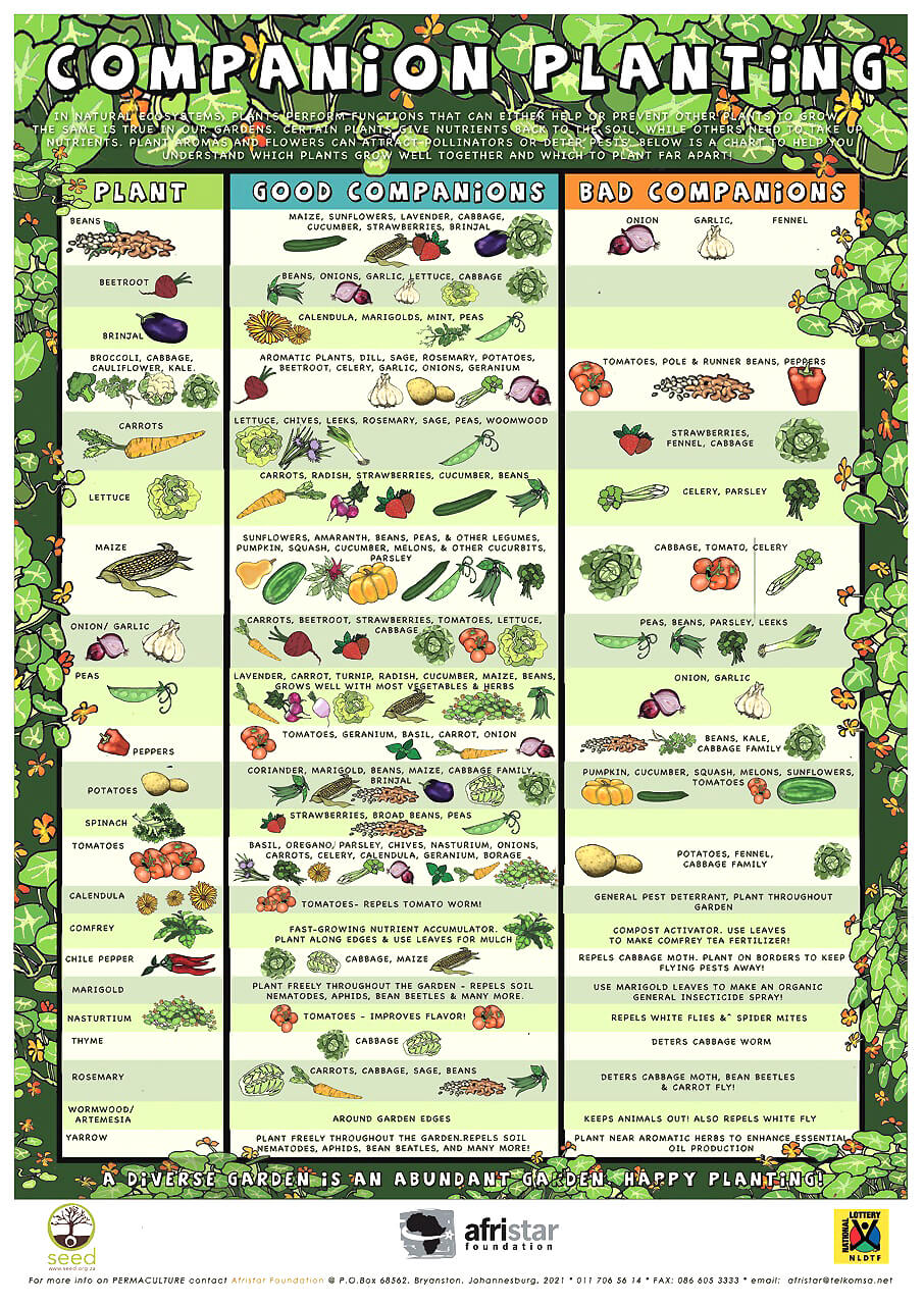 Companion Planting Table