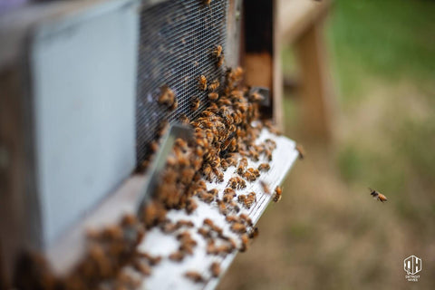 Tips for Bee Raising Success