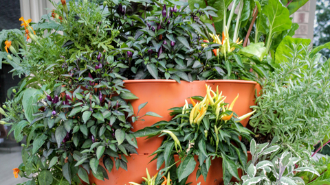 a closeup of a wide variety of vegetables and herbs growing in a vertical vegetable garden
