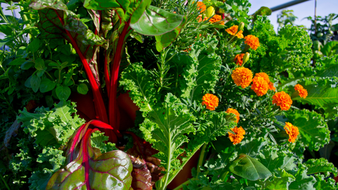 a variety of vegetables and flowers growing in a vertical vegetable garden