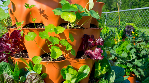 closeup of a variety of vegetables growing in a vertical vegetable garden