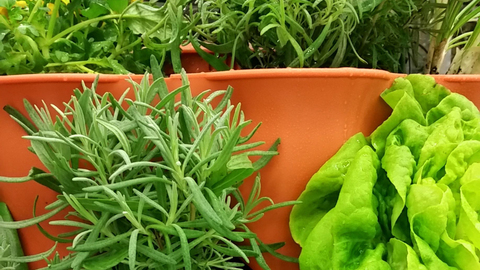 closeup of herbs and vegetables growing in a Garden Tower®