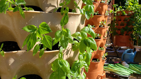 closeup of new plants in warm sandstone and terracotta Garden Towers®