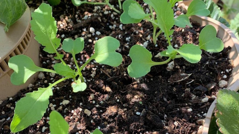 closeup of sprouts of plants in Garden Tower®
