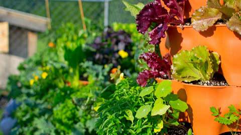 closeup of vegetables growing in a a Garden Tower® with other Towers blurred in the background