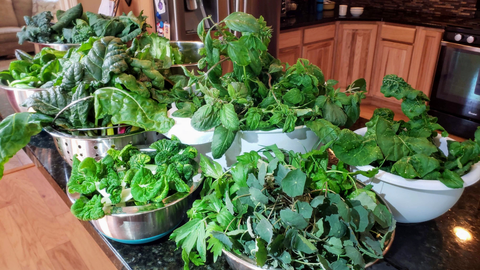harvest of herbs and vegetables from a vertical vegetable garden