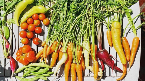 harvest photo of many different vegetables