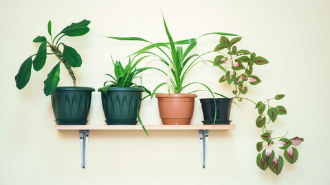 multiple houseplants sitting atop a shelf on the wall
