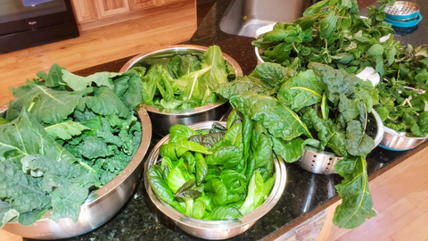 several bowls of salad greens from Garden Tower®
