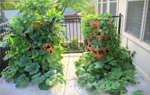 two Garden Towers® with large veggies being grown