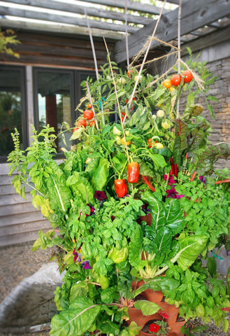 vertical vegetable garden with large vegetables planted in the top