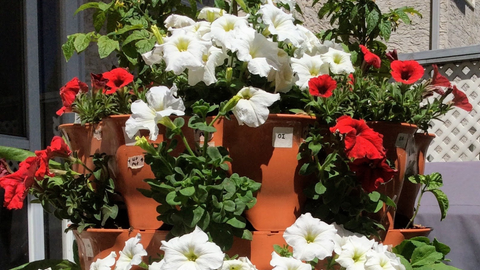white and red flowers growing among herbs and vegetables in a Garden Tower®