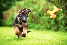 Load image into Gallery viewer, German Shepherd Puppy Diamond Painting Kit - DIY