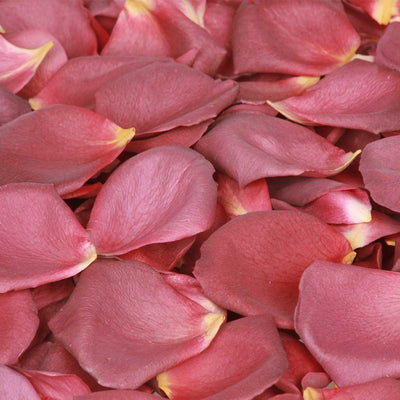 Chocolate Brown Rose Petals