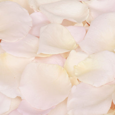 Cream Rose Petal Confetti