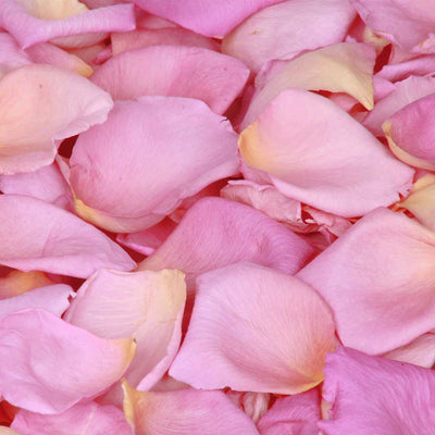 Pink And Yellow Rose Petals