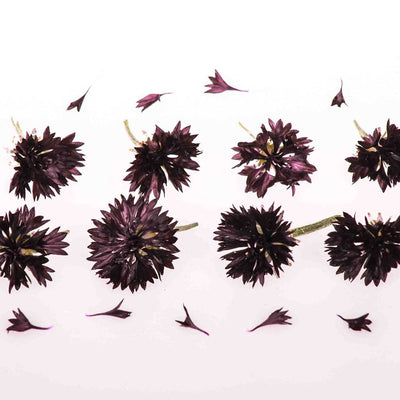 Black Edible Cornflowers
