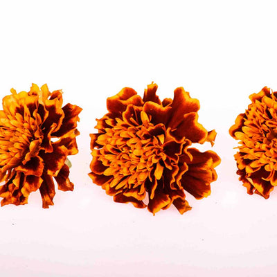 Indian Summer™ Organic Marigolds - Freeze Dried Edible Flowers