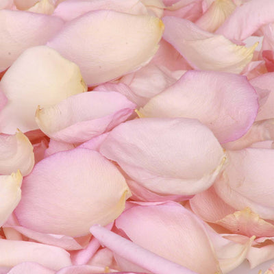 Pale Nude Pink Rose Petals