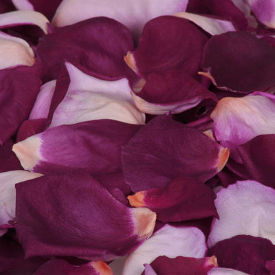 Burgundy Purple and Pink Rose Petals