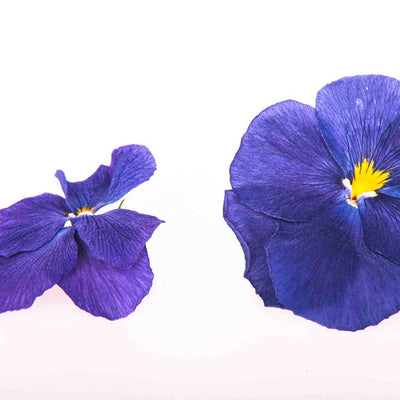 Purple Edible Pansies