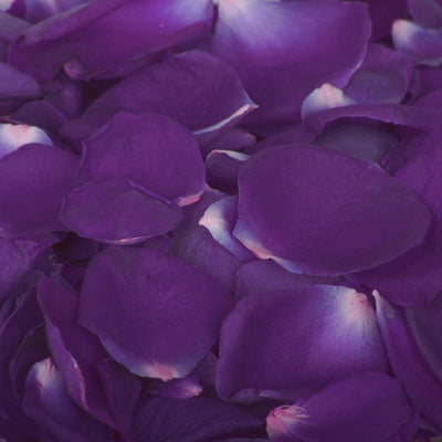 Dark Purple Rose Petals