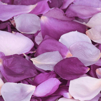 Light purple and dark purple rose petals