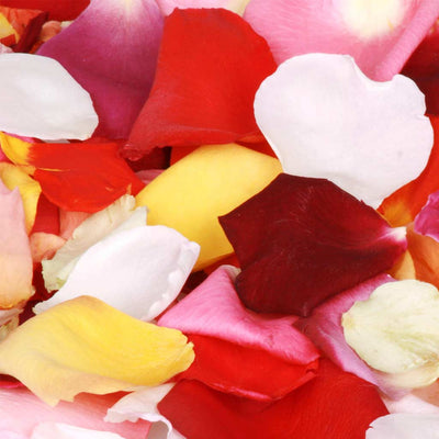 Brightly Coloured Rose Petal Confetti