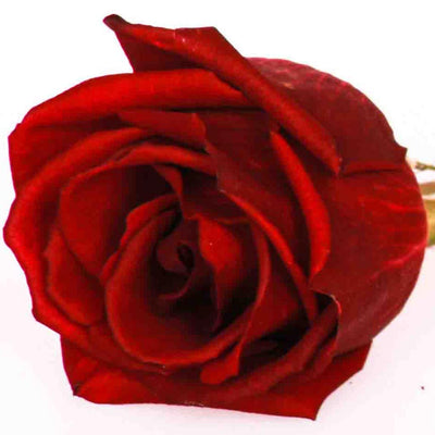 Red Edible Miniature Rose